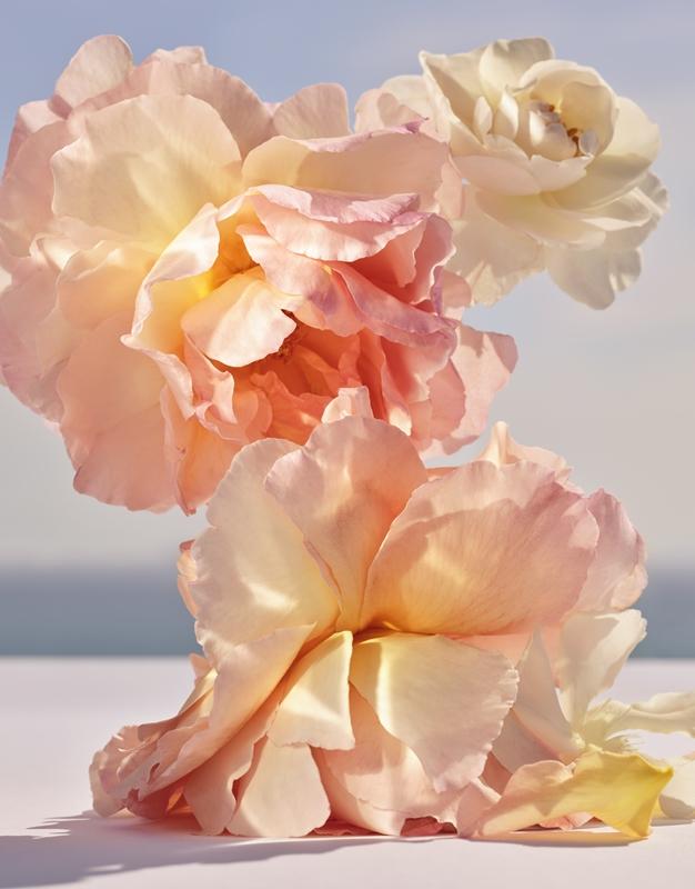 dancing blossom ingredients